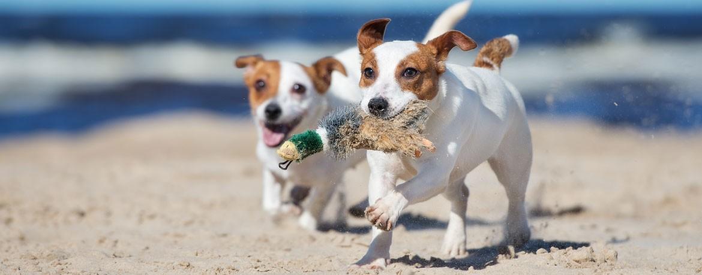 Urlaub mit dem Hund - praktische Tipps