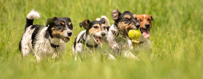 Hundezubehoer